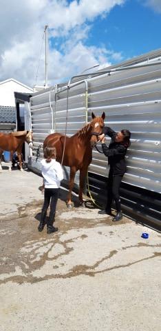 Baby poney 4